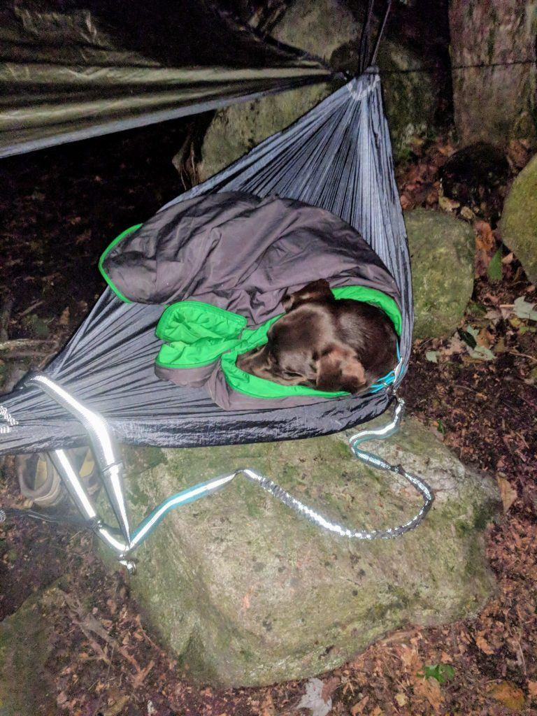 Photo of a dog sleeping in a hammock on the Appalachian Trail
