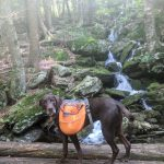 Photo of a dog on the Appalchian Trail near the MA CT border