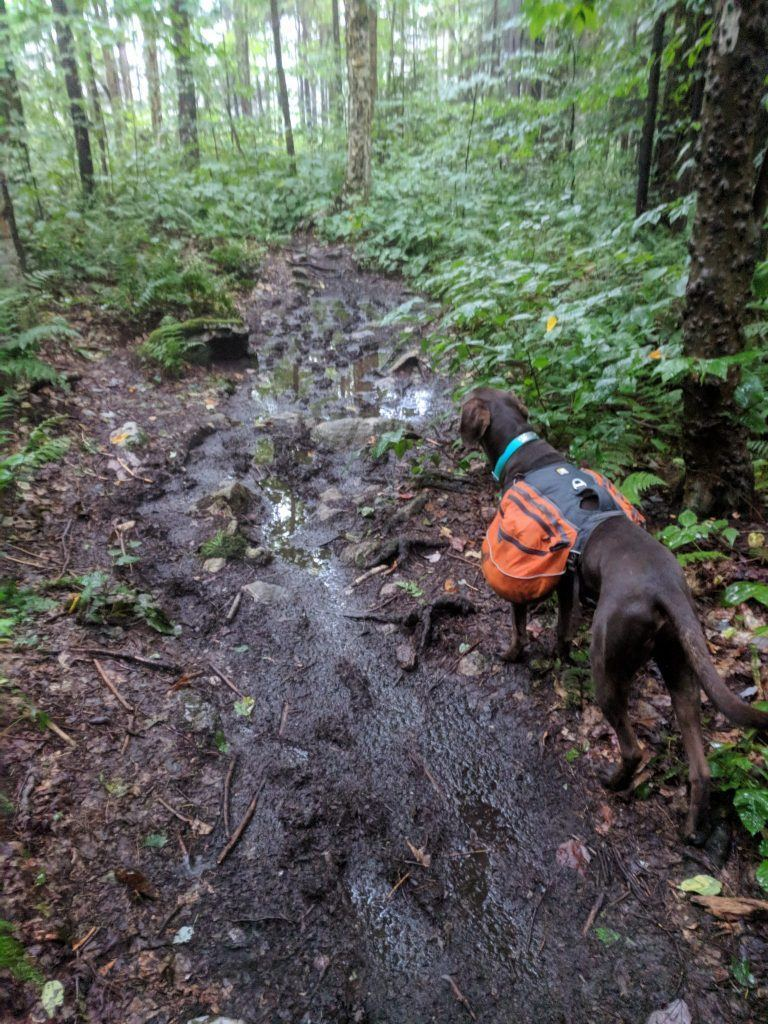 photo of dog hiking in mud in vermont