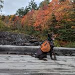 photo of a dog in maine with fall leaves