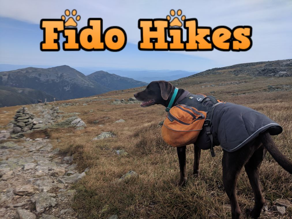 Photo of a hiking dog wearing a waterproof backpacking dog collar in the White Mountains of New Hampshire.