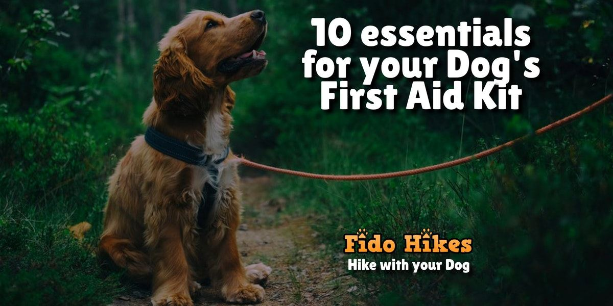 graphic for a blog post titled 10 essentials for your dog's first aid kit