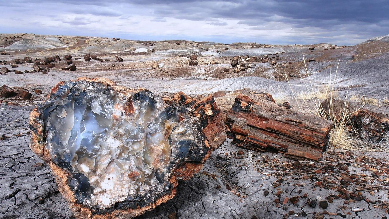 Photo of Petrified Forest logs scattered throughout the park