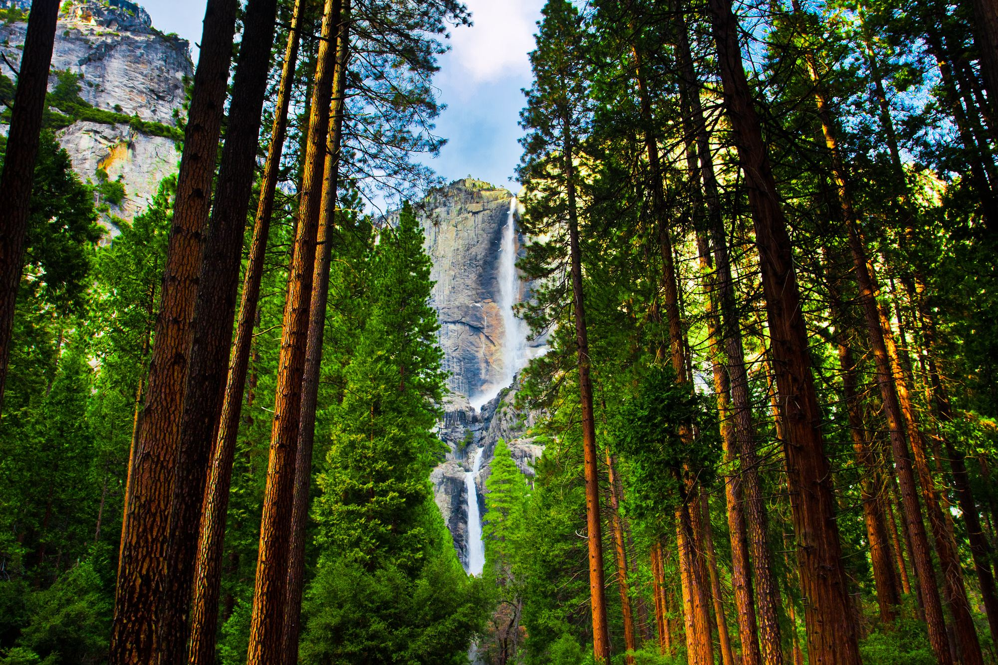 Yosemite waterfall behind giant Sequoia trees