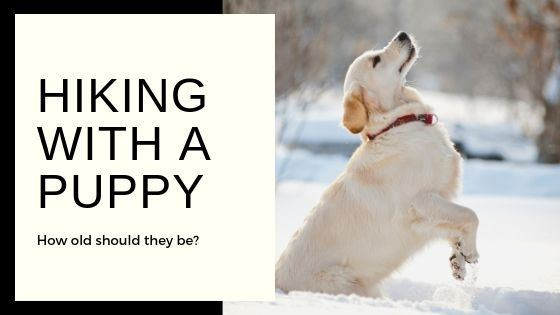 Hiking with a puppy - article on how old puppies should be to start hiking
